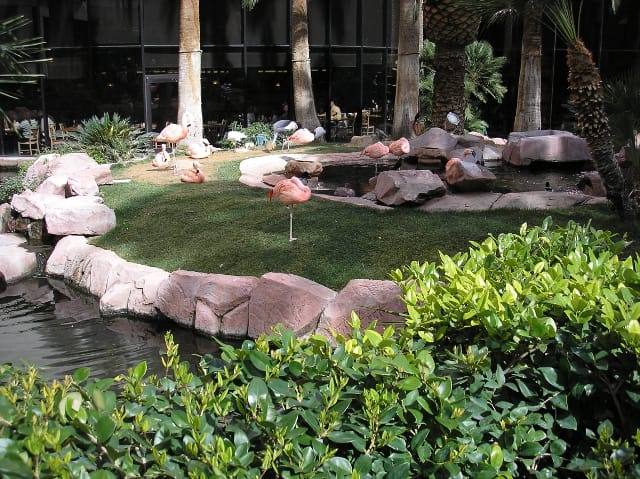 Wildlife Habitat at Flamingo